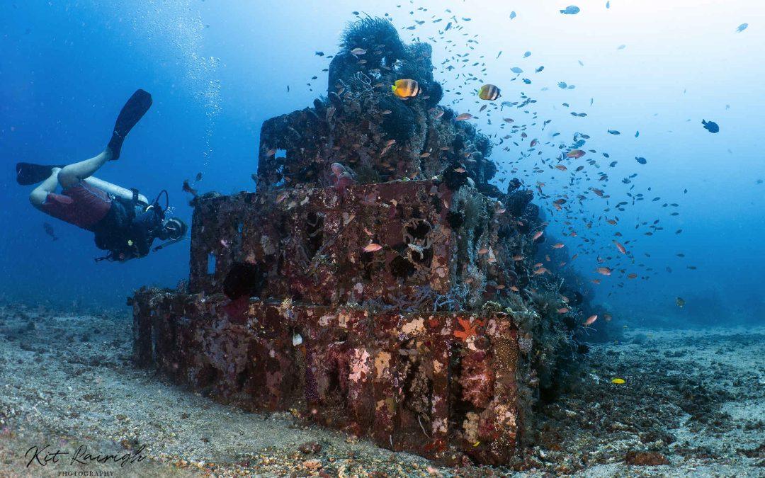 Récif artificiel : une renaissance pour la biodiversité